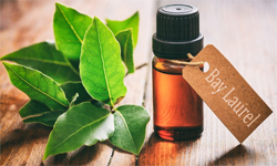 laurel-essential-oil2