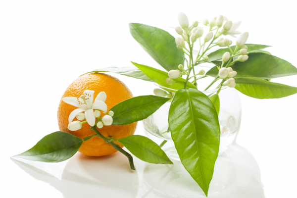 Orange_Blossom_Water
